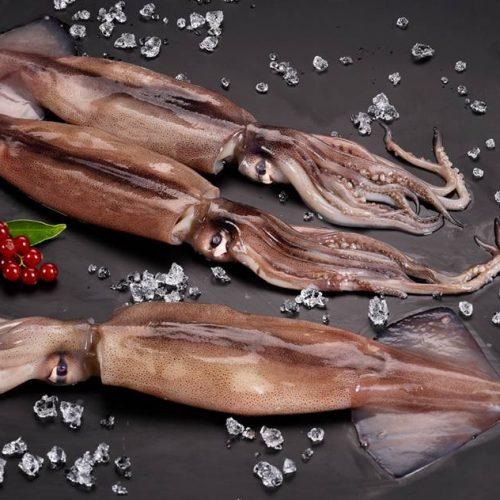 Argentine shortfin squid (Illex Argentinus)